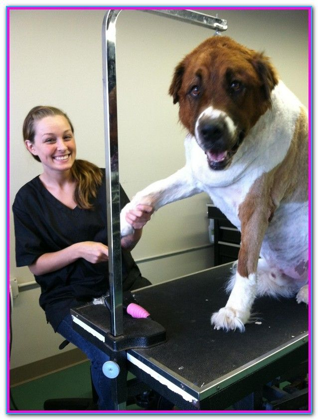 See Spot Dog Grooming Louisville Ky See Spot Grooming And