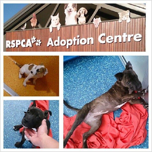 Rspca Adoption Centre Adoption Center Adoption Pet Store