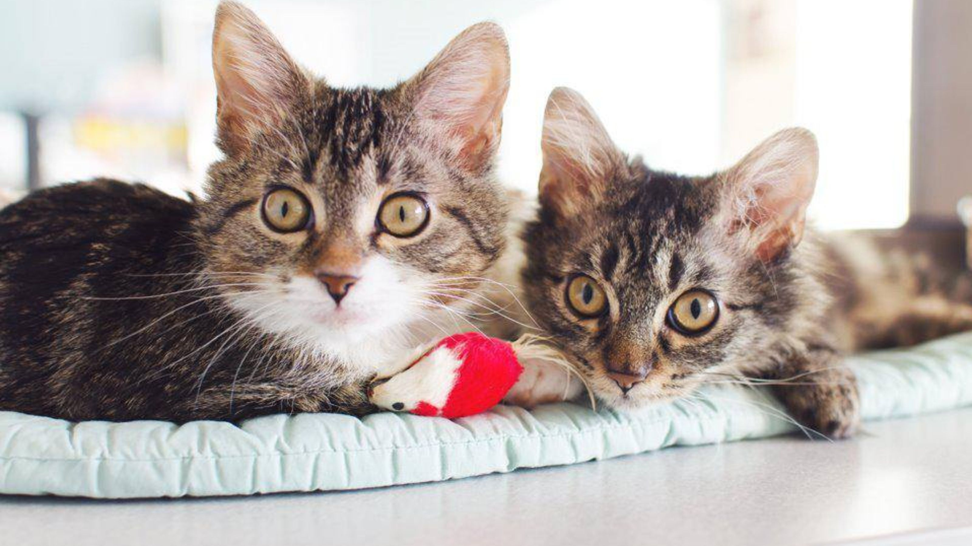 A Seattle cat rescue group has a couple of unique kittens