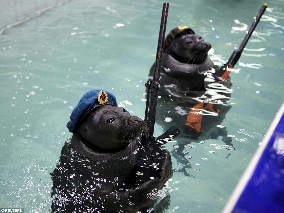 Seals with machine guns