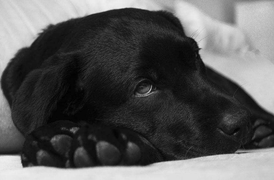 News For A Dog Day Afternoon P L A Y Blog 4 Physical Signs For Pets In Imminent Danger Worms In Dogs Sick Dog Sick Puppies