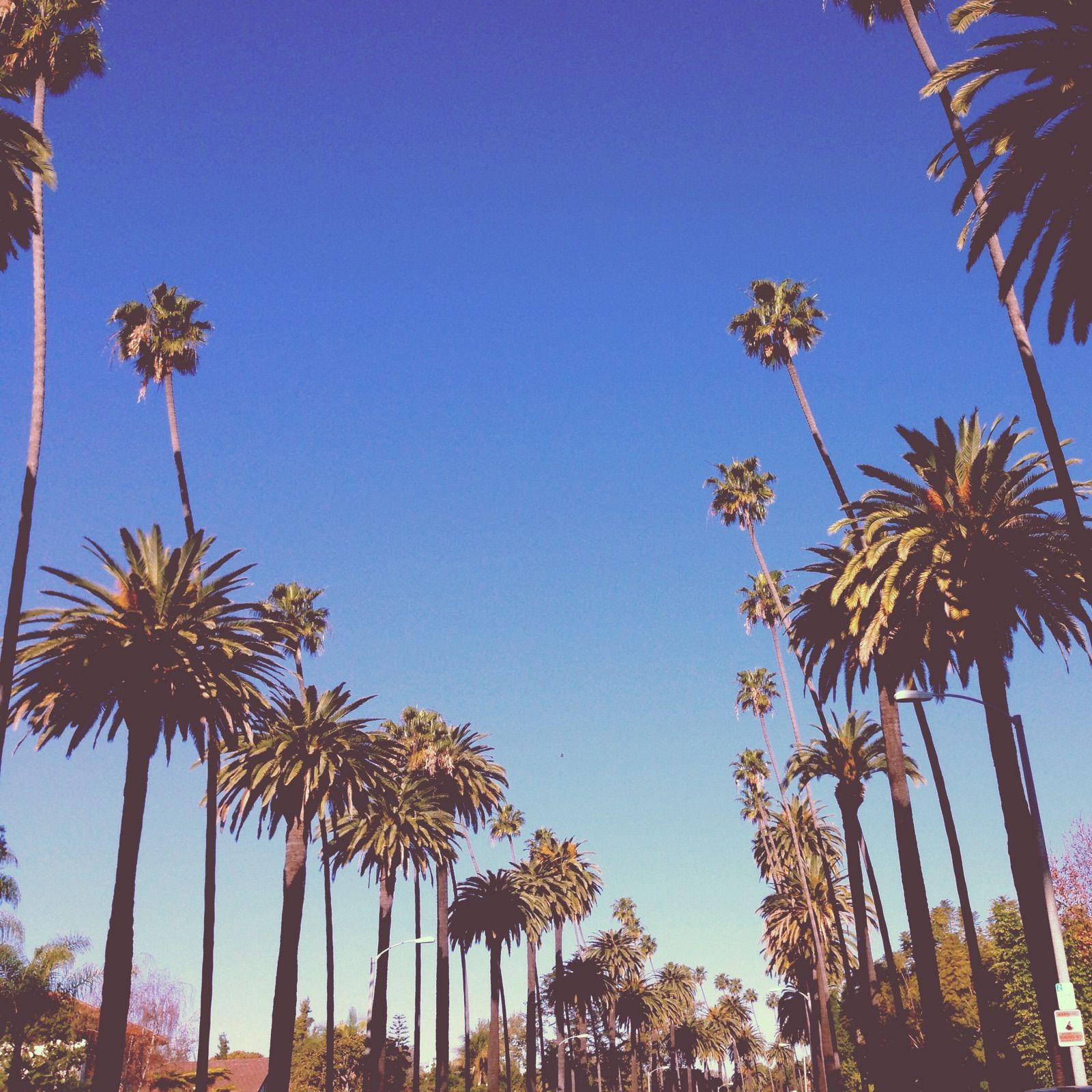 Palm trees, Beverly Hills