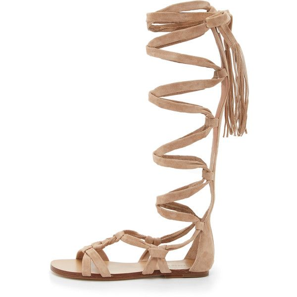 Sigerson Morrison Boni Suede Gladiator Sandals (€130) ❤ liked on Polyvore featuring shoes, sandals, gladiator shoes, roman sandals, sigerson morrison sandals, strappy gladiator sandals and tall sandals