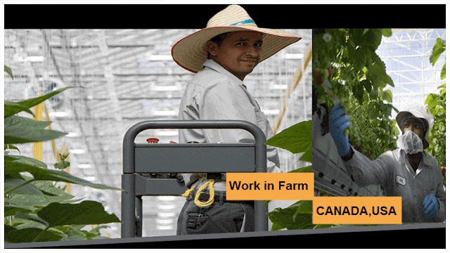 Job Search At Mucci Farms in CANADA and USA in 2020 Job
