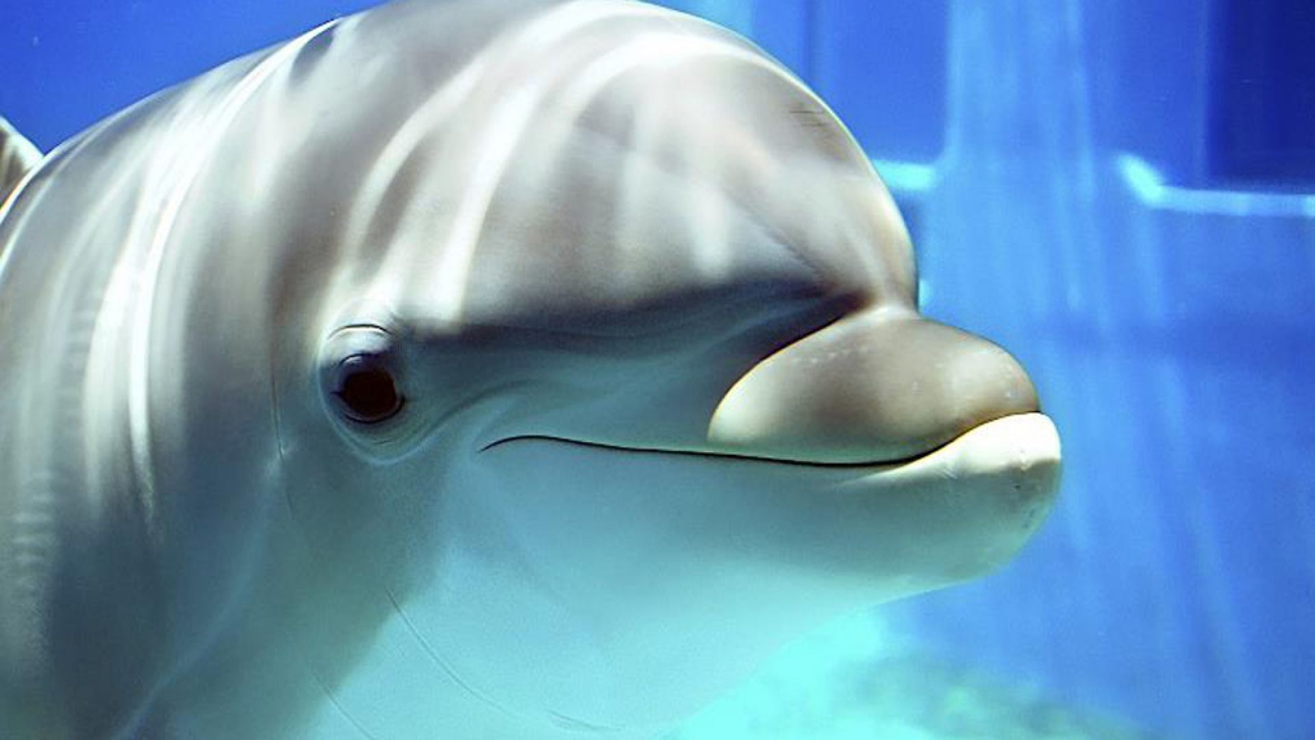 YouWall Dolphins Wallpaper wallpaperwallpapersfree