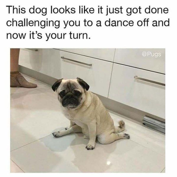 Dog Memes To Brighten Up Your Day Funny Animals Daily Lol Pics Funny Animal Memes Pugs Funny Funny Dogs