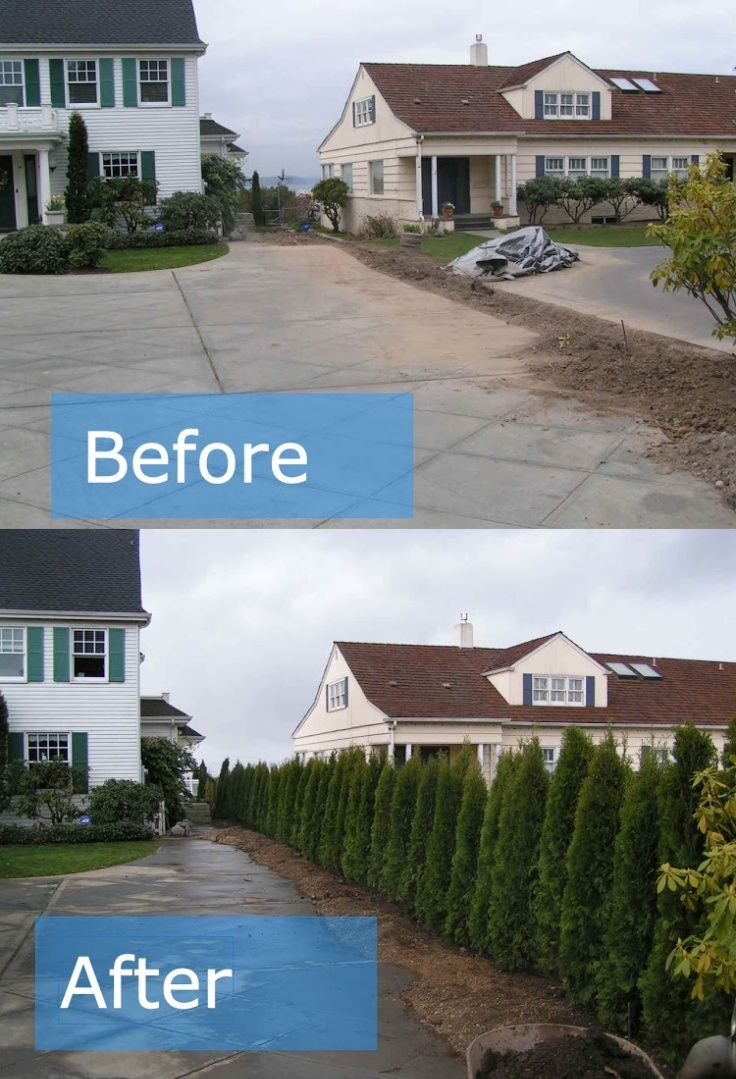 before and after privacy trees house pinterest privacy trees