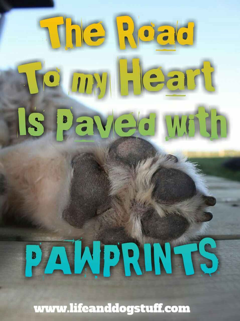 35 Most Beautiful Dog Quotes And Sayings Cute Dog Quotes Dog
