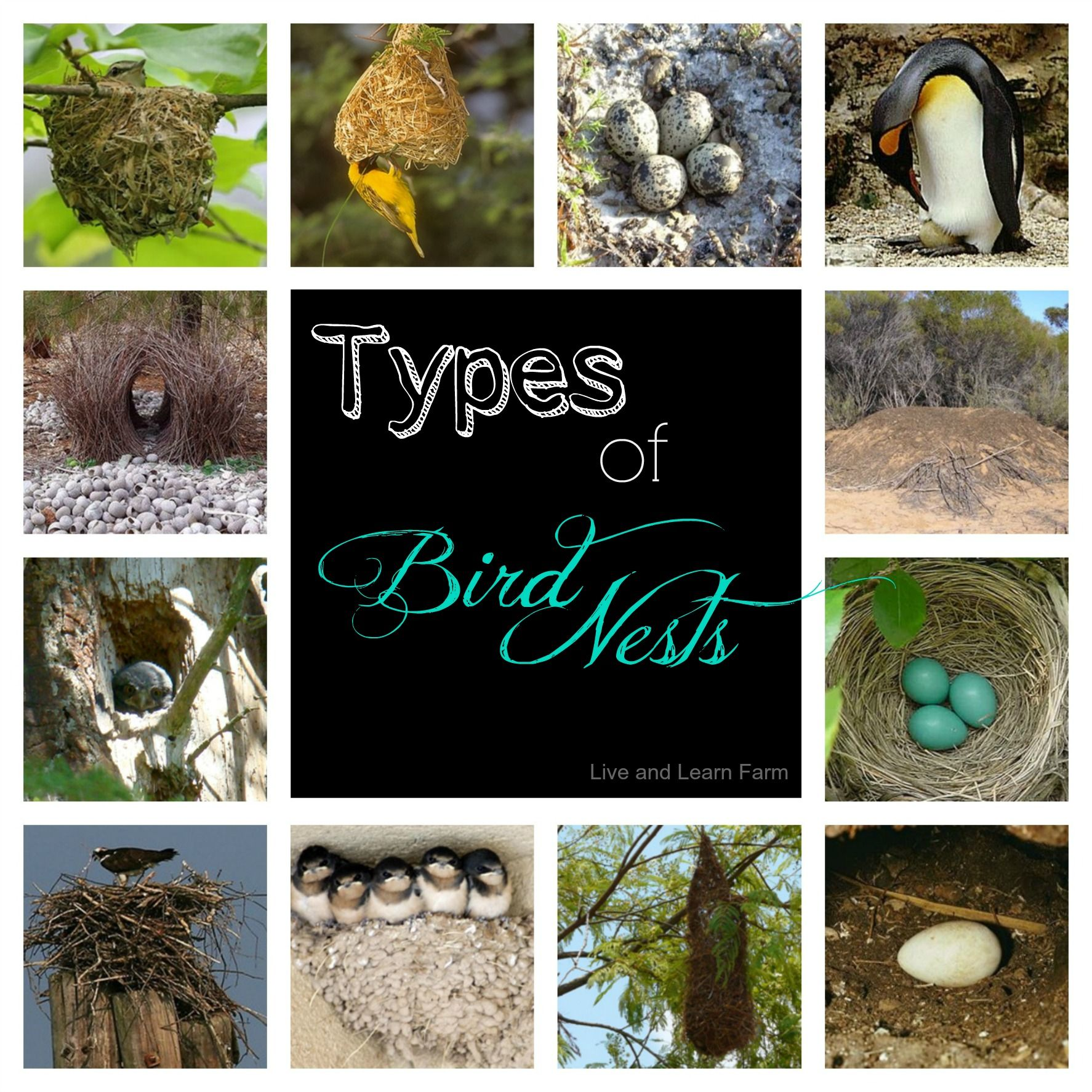 Types Of Bird Nests 3 Part Cards
