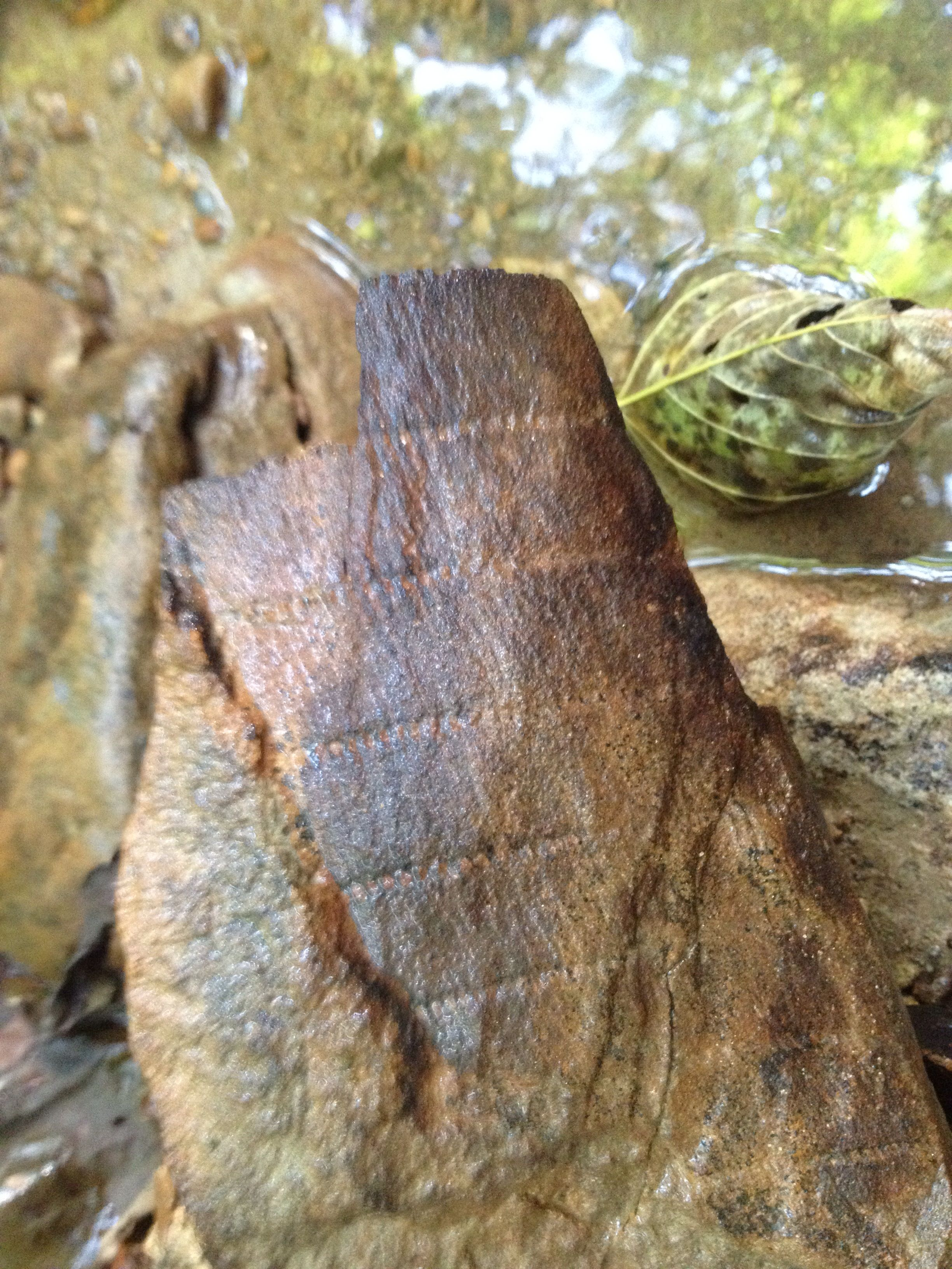 Fossil Found In Creek Mingo County Wv