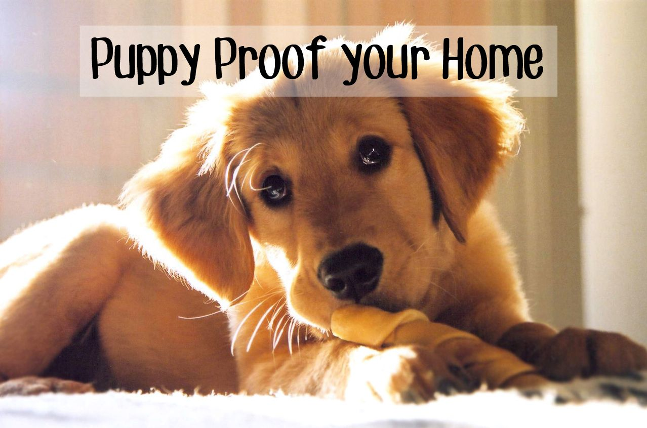 Fool Proof Ways To Puppy Proof Your Home Before You Bring In Your - 26 dogs puppyhood photos