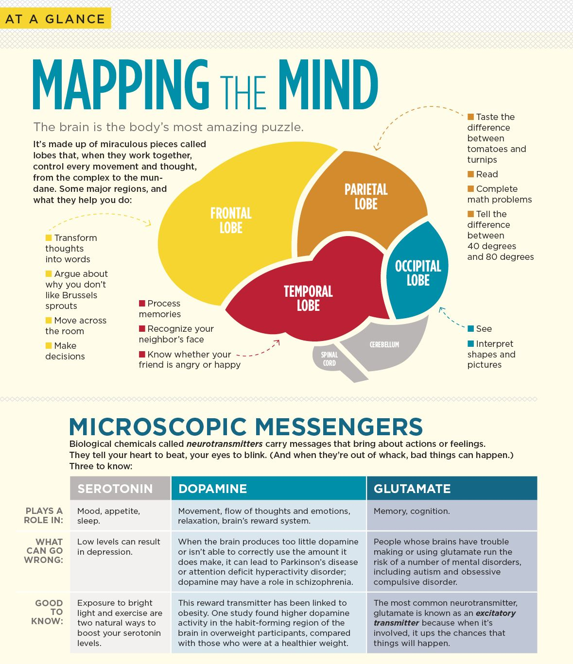 Science Facts Brain: Mapping The #Mind: The #brain's Lobes And