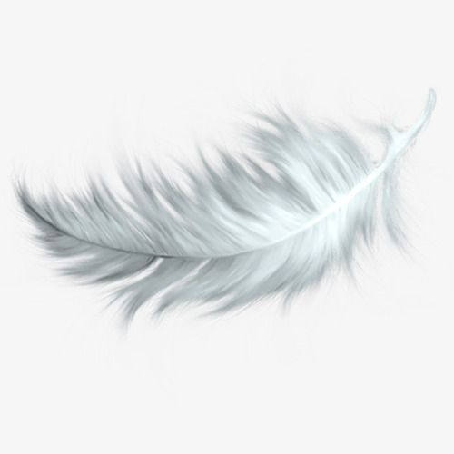 Falling White Feathers White Feather Falling Feathers Png Transparent Clipart Image And Psd File For Free Download Feather Tattoos Falling Feather Tattoo Feather Tattoo Design