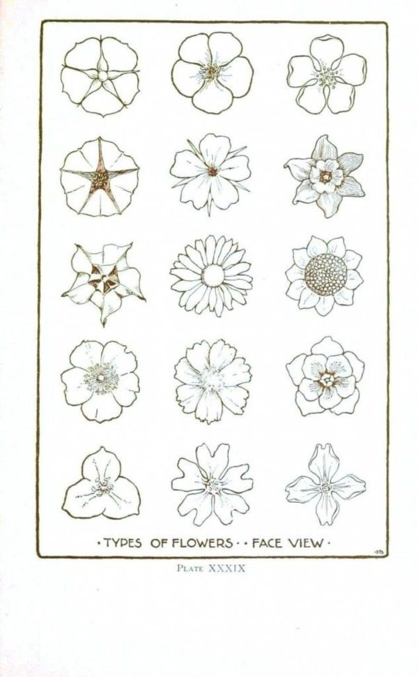 How To Draw A Flower Step By Step Image Guides Flower Drawings