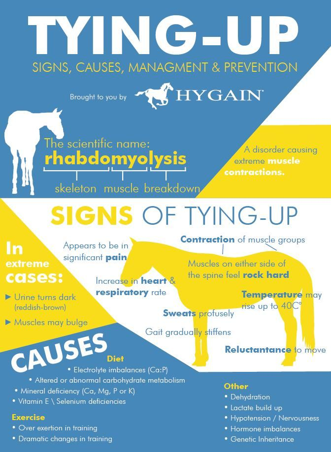 Free Fact Sheet  TyingUp In Horses  Horse Health  Physical And
