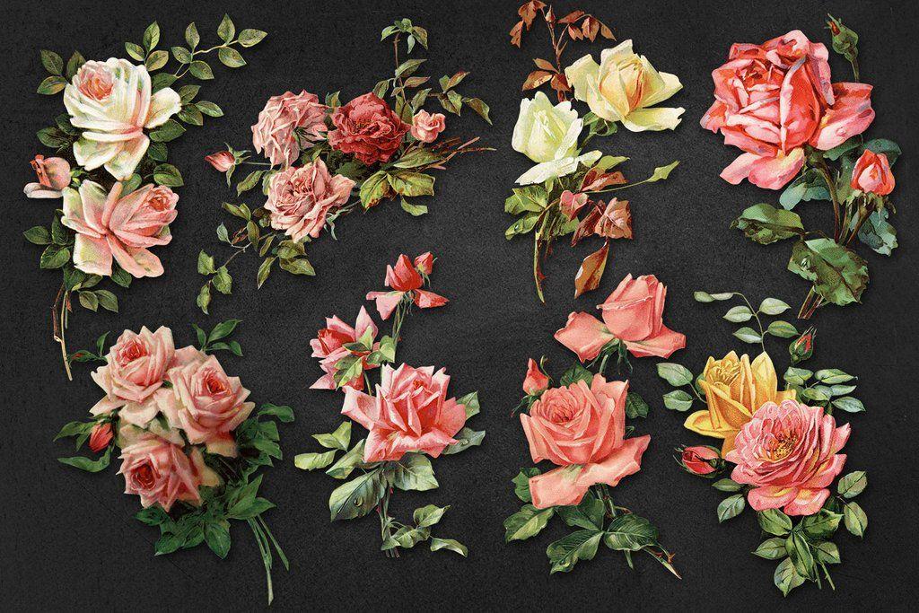 High Resolution Vintage Rose Graphics Vintage Roses Background Vintage Vintage Large
