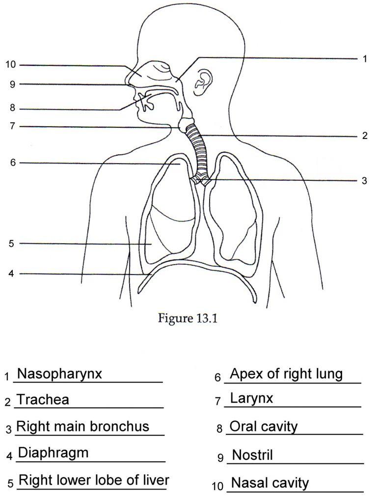medium resolution of superior body diagram unlabeled wiring diagramsuperior body diagram unlabeled schematic diagramsuperior body diagram unlabeled wiring diagrams