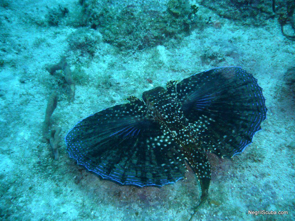 Corals of the Caribbean Sea by Sanny van Loon ... |Ocean Life Plant Caribbean