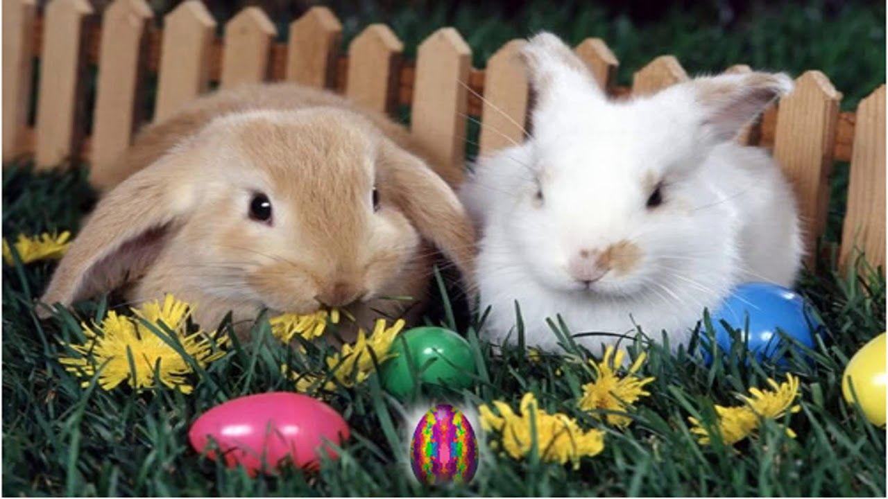 frohe ostern 2018  ostern wallpaper frohe ostern hasen