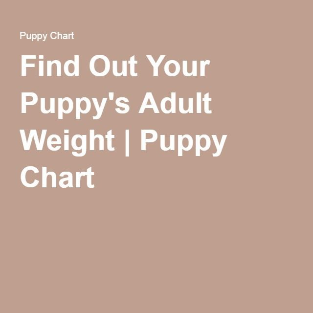 Find Out Your Puppys Adult Weight Puppy Chart Yorkieadult Dog