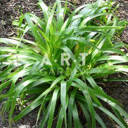 graminées luzula sylvatica onderbos   siergrassen   pinterest   tuin, Gartenarbeit ideen