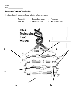 DNA Replication Worksheet | Molecular Biology | DNA, Molecular ...
