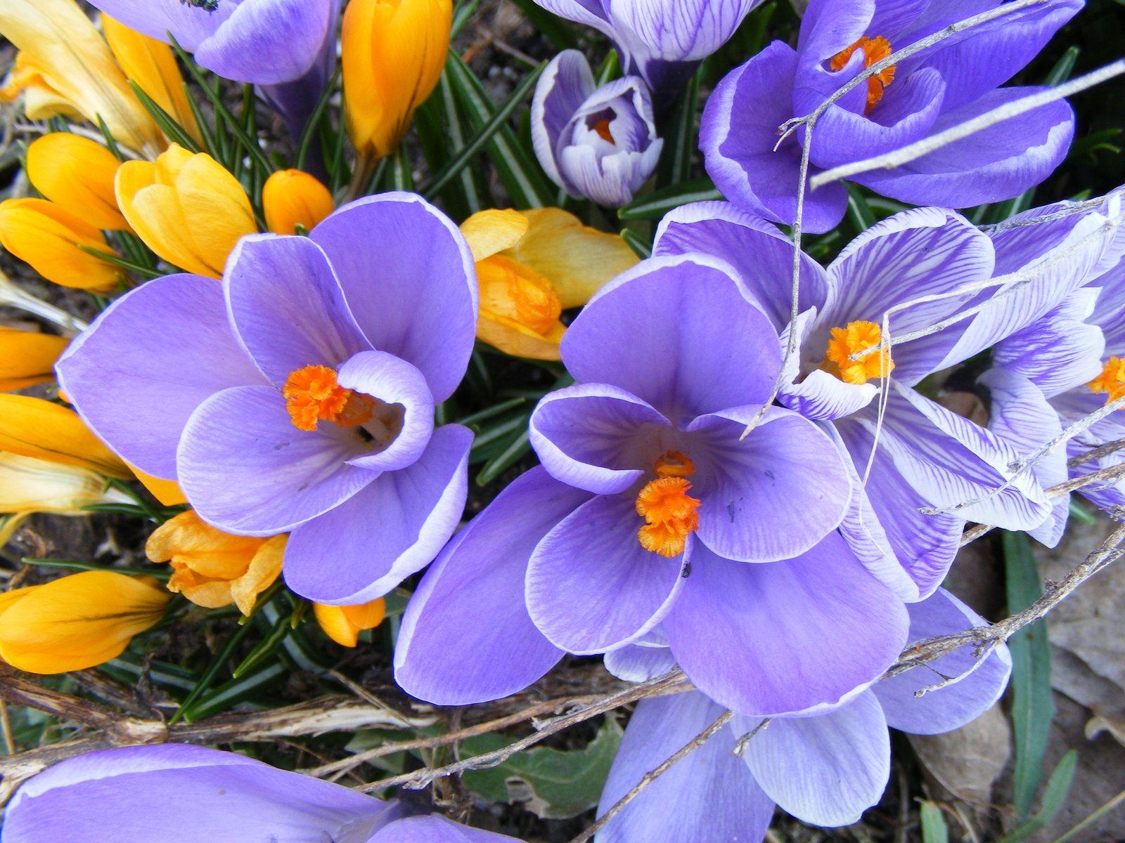 fiori-di-bach.jpg (1600×1200) | fiori | Pinterest