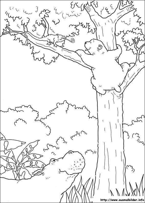 Der Kleine Eisbar Malvorlagen Bear Coloring Pages Polar Bear Coloring Page The Little Polar Bear