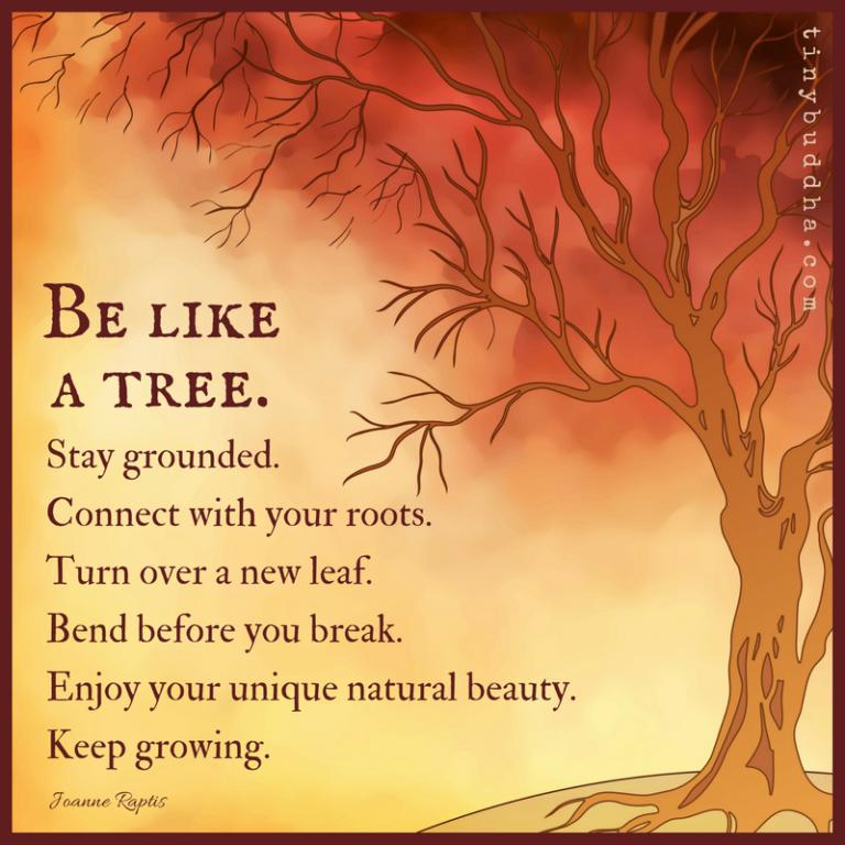 Be Like a Tree - Tiny Buddha