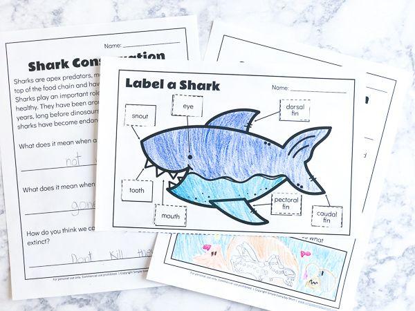 3 Free Printable Shark Worksheets To Teach Kids | Shark ...