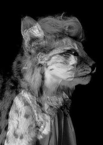 catwoman wonderful-world