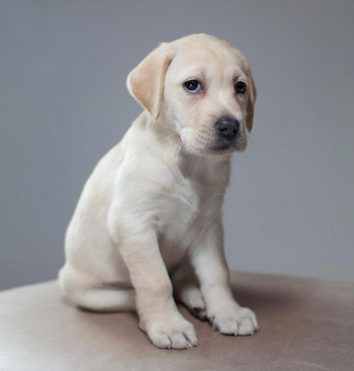 Hilarious And Heartwarming Dog Portraits En 2020 Ricardo