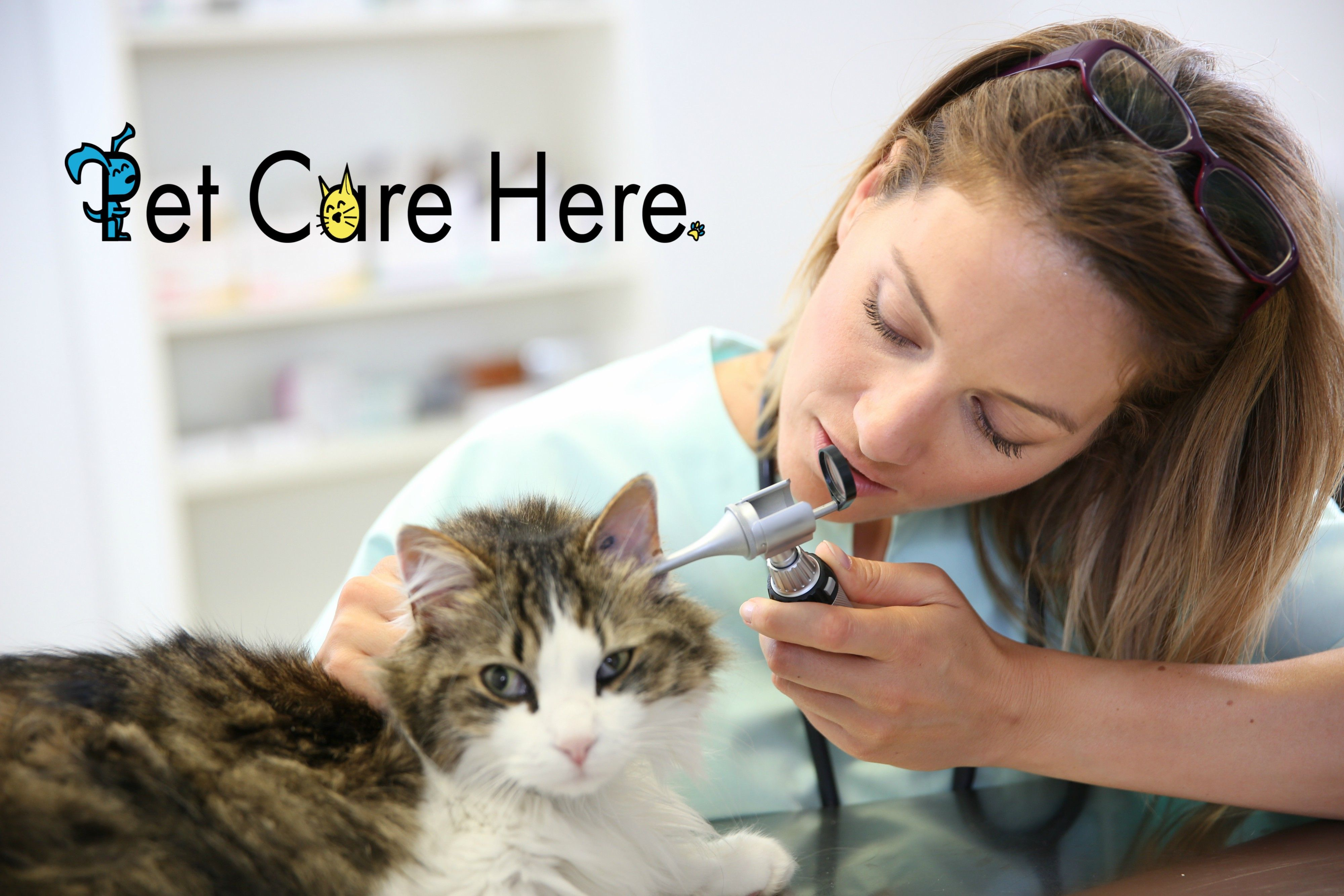 Compassion Fatigue Veterinarians Hurt that is Never