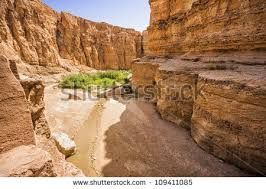 Image result for oasis tunisia