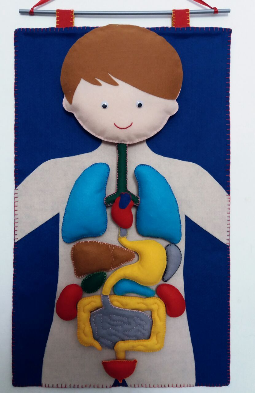 Faça você mesmo: um corpo humano de feltro para as crianças ...