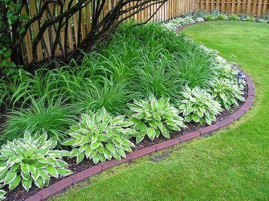 Sunny Day-Dreamin\u0027 Ideas para fotografía, Jardín y Plantas - plantas para jardin
