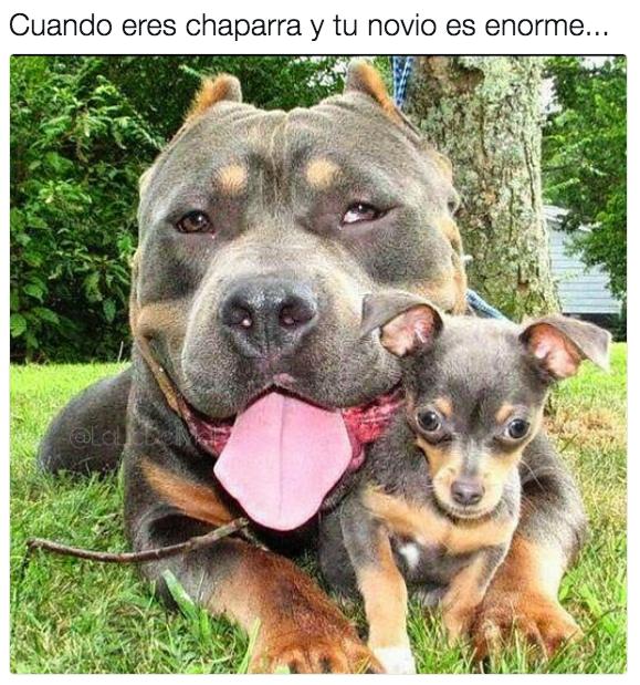 19 Memes Que Te Van A Hacer Reir Si Mides Menos De 1 60 Cute Animals Animals Funny Animals
