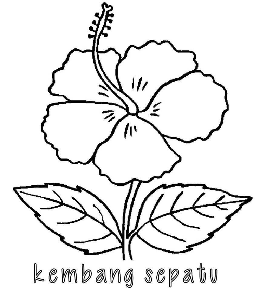 Gambar Bunga Gampang Ditiru di 2020 | Bunga, Sketsa ...