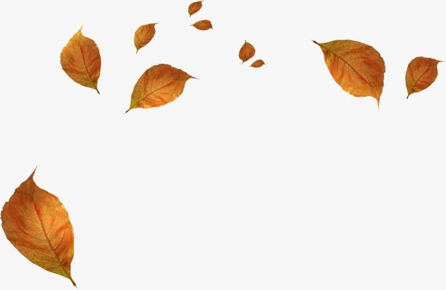 Withered Autumn Leaves Fall Maple Leaf Leaves Png Image And Clipart Flower Png Images Autumn Leaves Flower Background Wallpaper