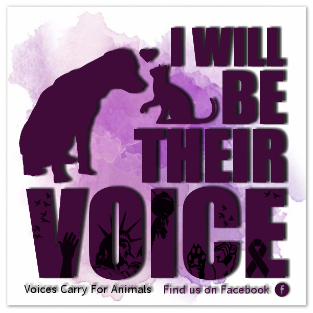 **6th Year AnniversaryVoices Carry For Animals Podcast