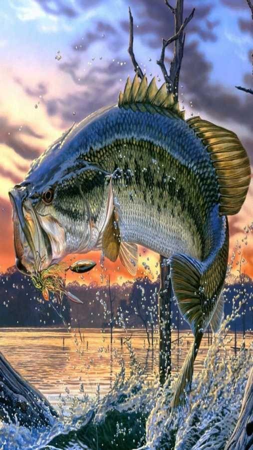 Bass Fish Wallpaper