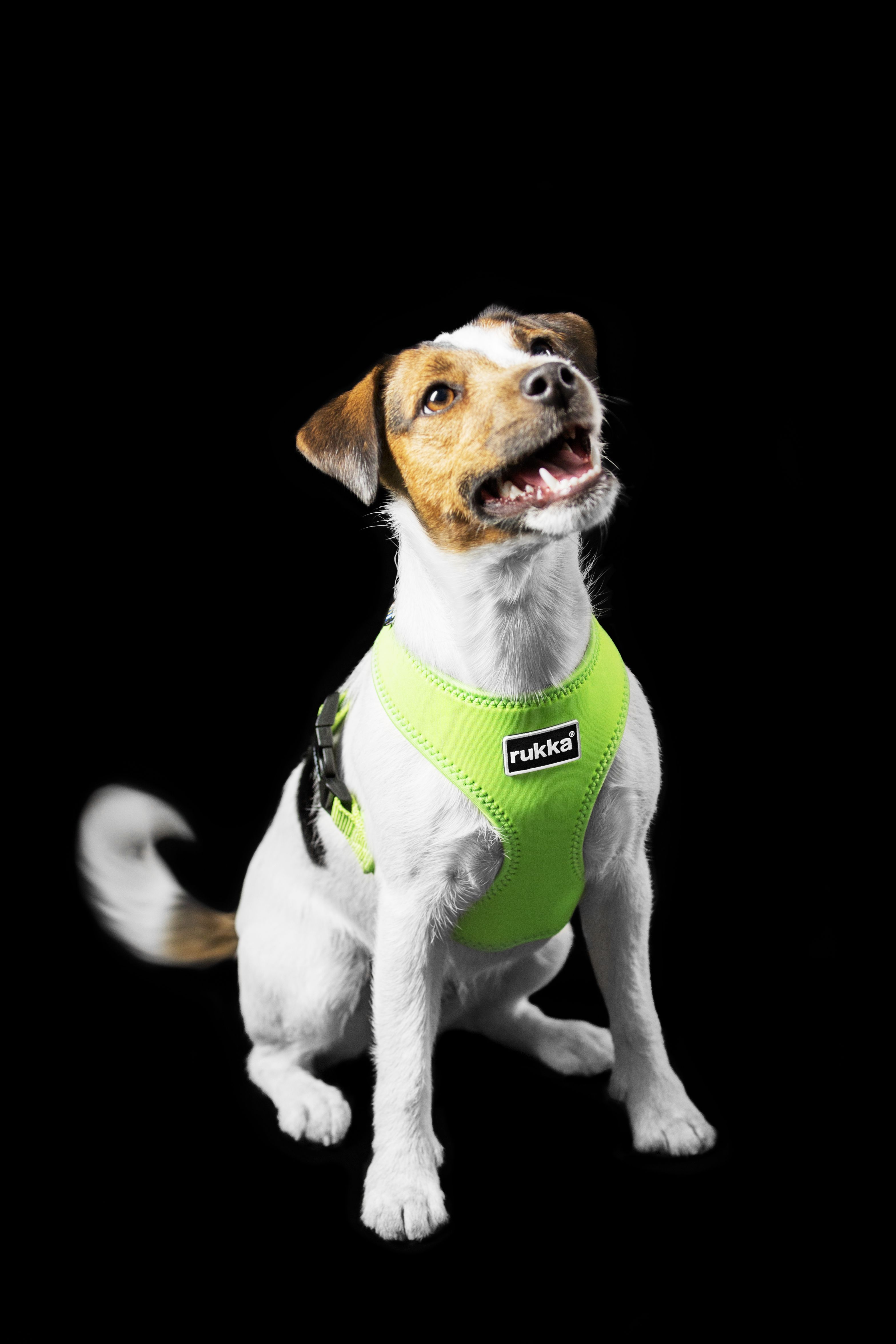 Comfort Harness Spring Summer 2017 By Rukka Pets Pets Doggy