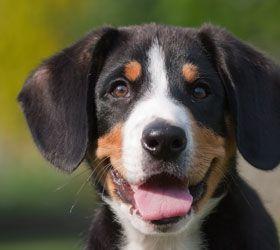 Cheyenne Animal Shelter Dog Food Reviews Best Dry Dog Food Dog