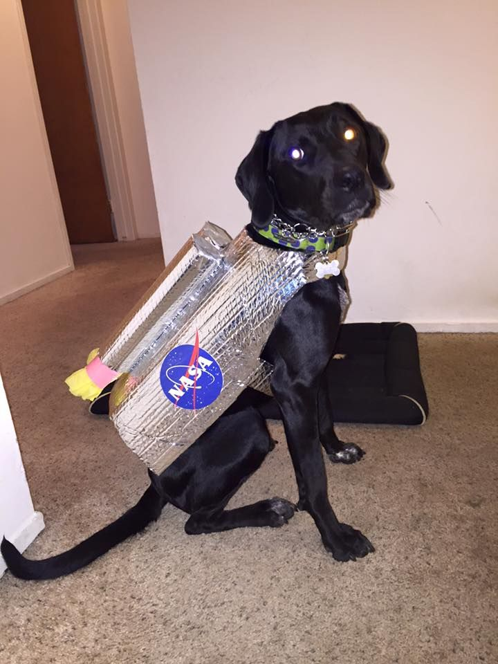 Halloween Astronaut Dog Costume Complete With Rocket Jet Pack