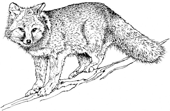 Fox Logo Tattoos Fox Have Products For Downloadnov Carfox Racing