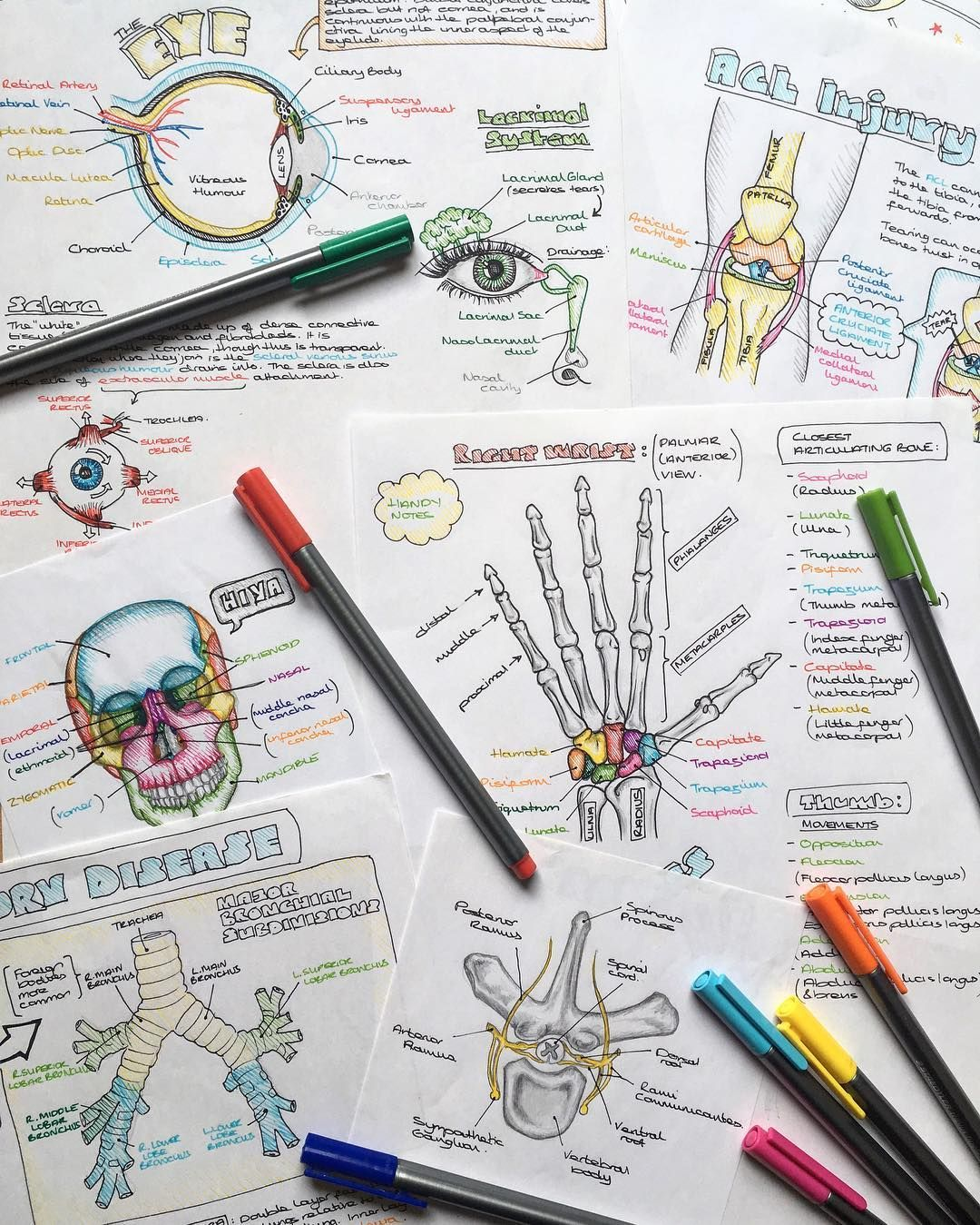 Cute Notes//Colourful | Anatomy & Physiology | Pinterest | Maneras ...