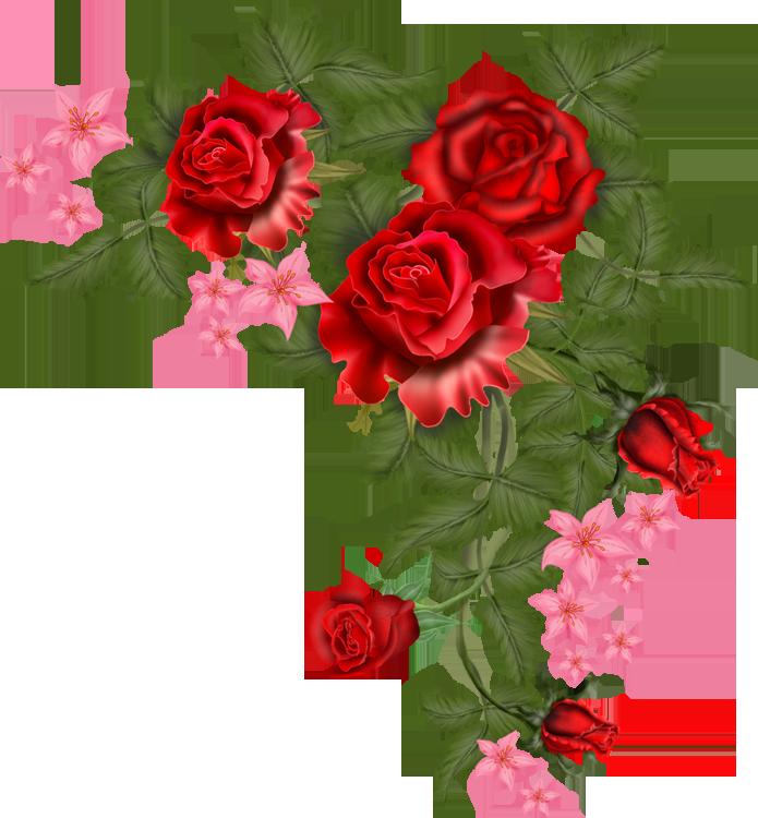 Pin De Oralia En Rosas Para Ti Flower Images Transparent Flowers