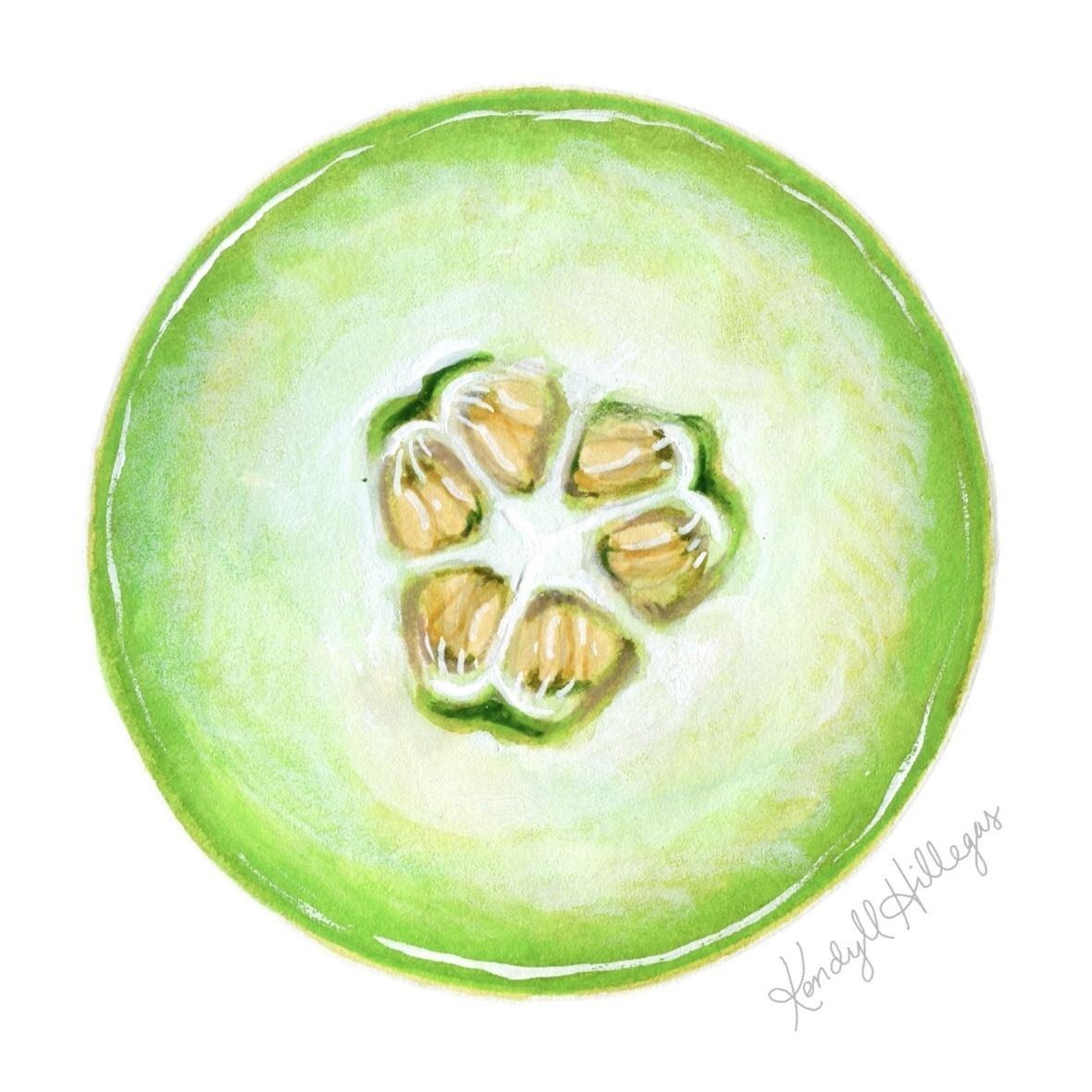 Honeydew By Kendyll Hillegas 30 Day Drawing Challenge Food Art Honeydew Fruit