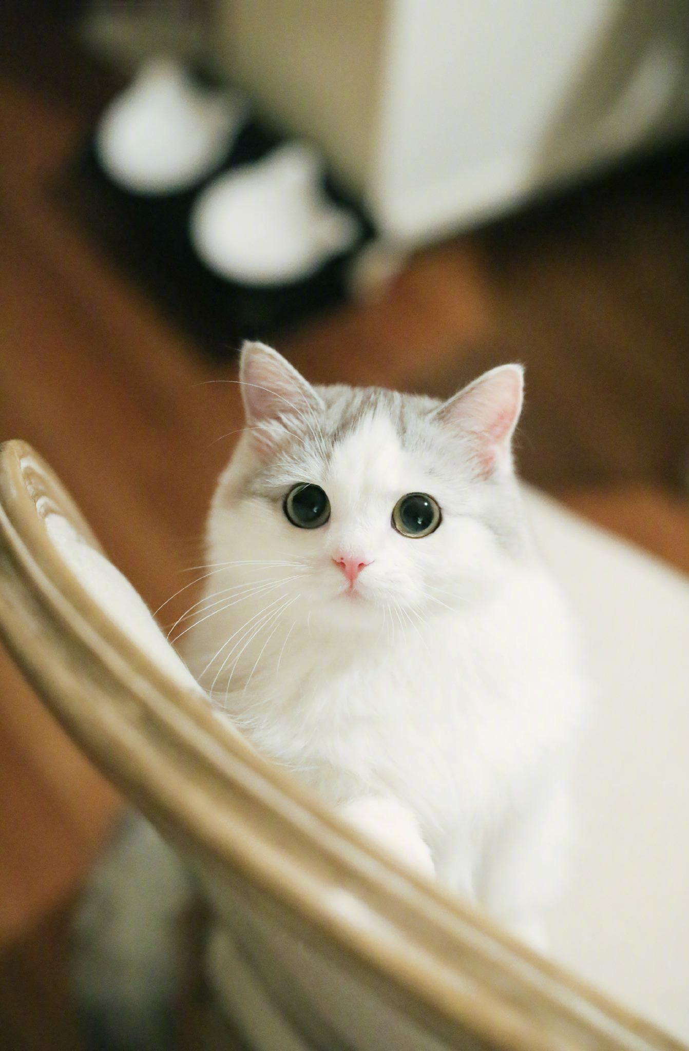 Corazon Miooo Anak Kucing Lucu Kucing Bayi Foto Kucing Lucu