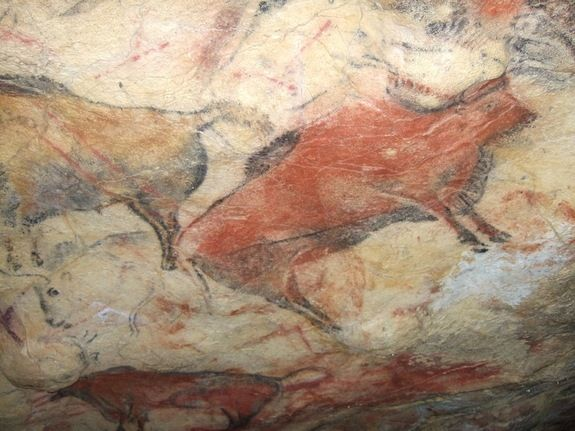 Altamira Bison - A painted bison on the ceiling of Altamira cave in Spain. The cave is closed to the public because human incursions have caused damage to the 14,000-year-old paintings. (Credit: MNCN-CSIS, Spain)